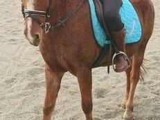 Pony de 9 años