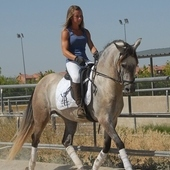 caballo PRE montado desde 2500€