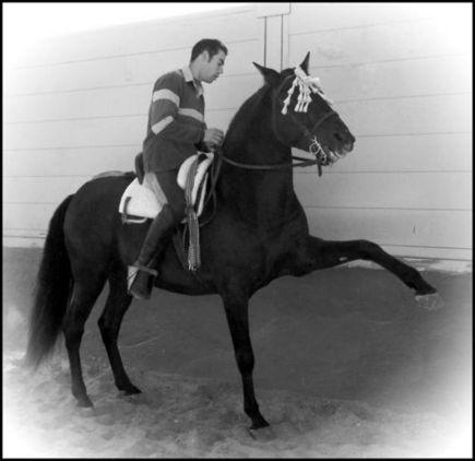caballos (Doma)