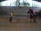 caballos (Doma)  en venta