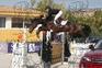 Yegua silla francés de salto de obstáculos en venta en España