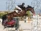 Yegua silla francés de salto de obstáculos