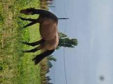 Lote de 3 caballos
