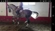 centro de doma da la opcion de cambiar su potro por caballos domados a todos los niveles