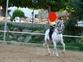 Venta caballo con doma clasica en venta