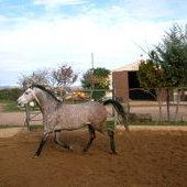 Desbrave  de potros y doma de caballos