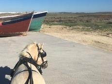 Pony B Perla welhs