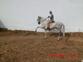 vendo caballo pura raza español
