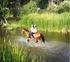 caballo cde 11 años en venta en España