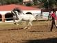 Venta caballo con doma clasica