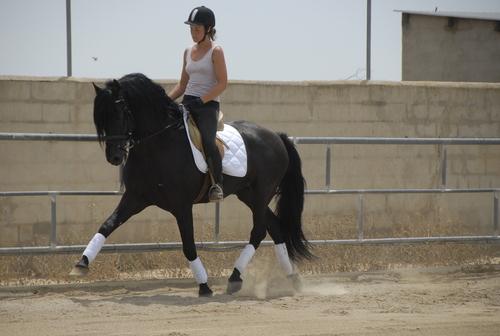 60 caballos PRE montados / domados