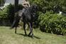 60 caballos PRE montados / domados en venta en España