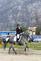 Caballos Pura Raza Española (P.R.E.) en venta