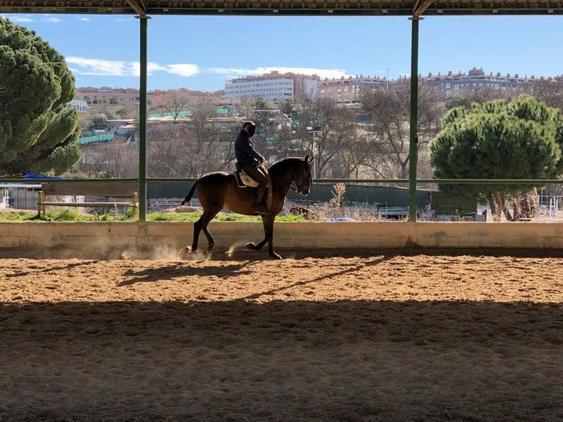 Vendo caballo puesto a la vaquera