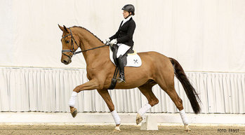 De doma, caballo HANNOVERIANO