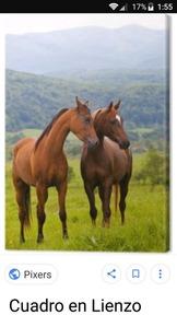 Busco que me regalen un caballo solo regalar