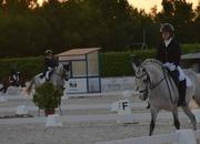 Pony D, muy domado para competición, carácter excepcional