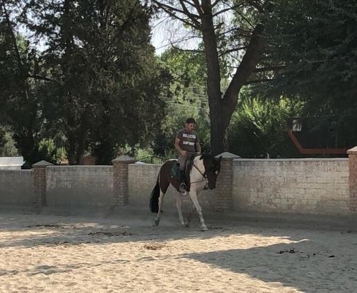 Se vende pony D