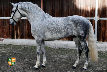 Venta de caballos P.R.E