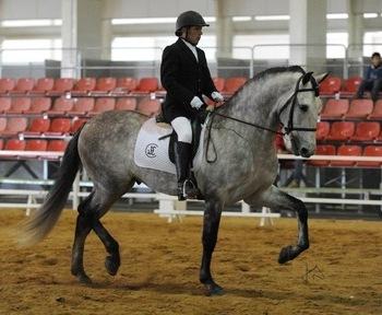 cubriones con Tabasco MAC, un caballo de hierro cardenas hijo de fuego (caballo olimpico)