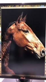 Fantastico caballo cruzado