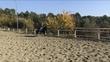 Se CEDE caballo P.RE