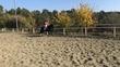 Se CEDE caballo P.RE  en venta en España