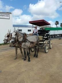 Alquiler coche de caballos 12 plazas