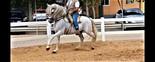 Caballo de hierro de bohorquez  en venta en España