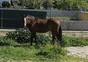 Vendo caballo español cruzado lusitano