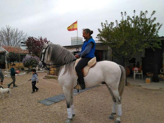 caballo PRE de 5 años
