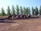 Clases de equitación en venta en España