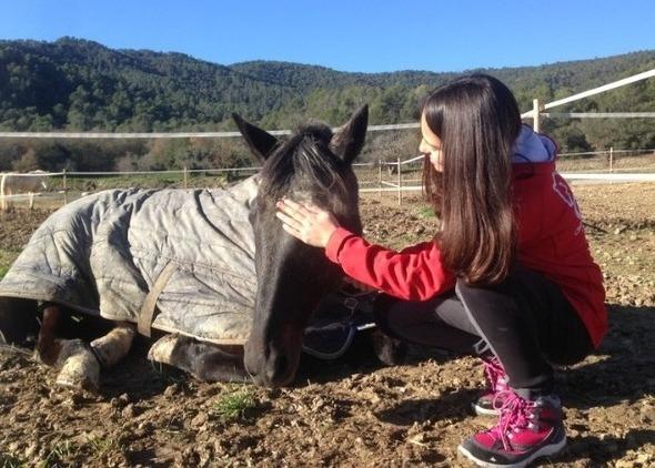 Vendo caballo Hispano Árabe