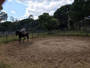 caballo PURA RAZA ESPAÑOLA