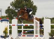 En venta caballo de salto