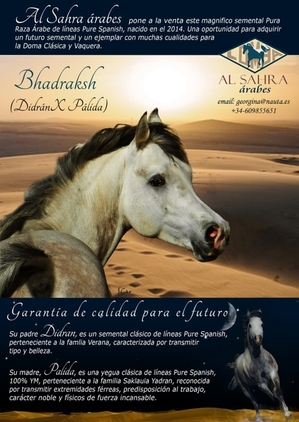 YEGUADA AL SAHRA ARABES