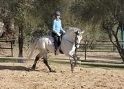 Magnifico caballo Lusitano