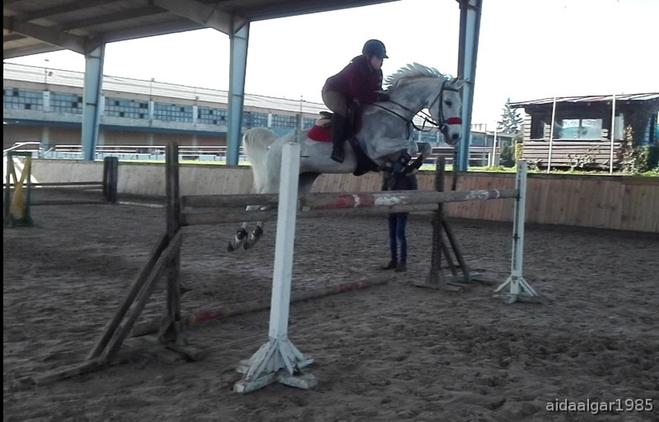 Busco caballo cedido para concursar