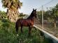 Busco caballo o yegua noble