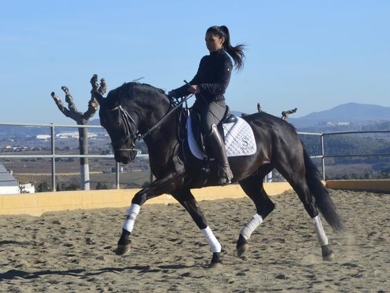 Venta caballo PRE