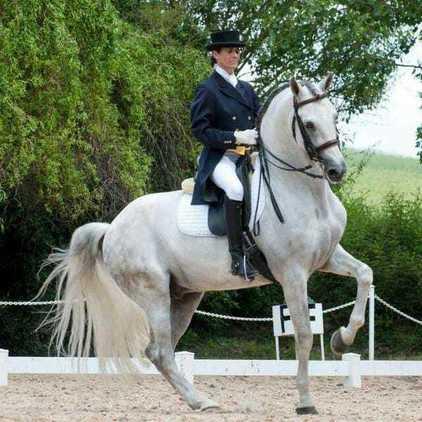Espectacular caballo luso-arabe