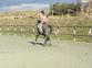 Espectacular caballo luso-arabe en venta en España