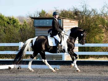 Superb All-around Gelding with amazing personality