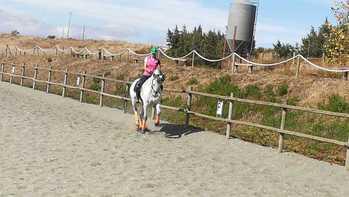 Magnifico caballo P.R.E