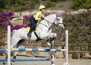 Venta caballos de salto