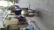 Caballo cruzado de lusitano en venta