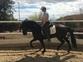 Se vende caballo hispano lusitano