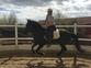 Se vende caballo hispano lusitano en venta en España