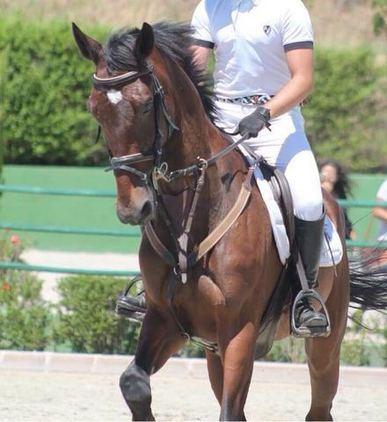 vende caballo de salto K. W. P. N