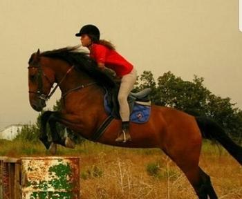 Estoy interesada en CESIÓN de caballo de salto